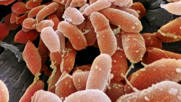 Sociedade Científica apresenta diretrizes para infecções por biofilme