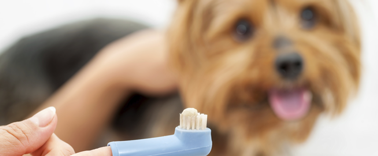 Saiba cuidar da saúde bucal e dos dentes do seu cãozinho